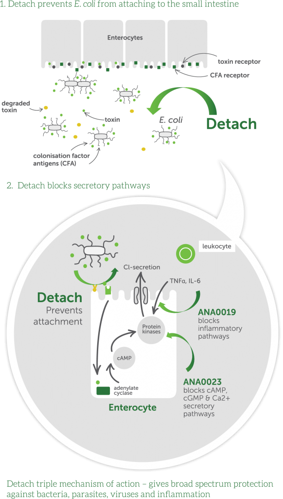 Detach-mechanism-of-action-NO-TITLE